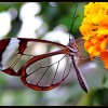 Butterfly – The Most Beautiful Insect