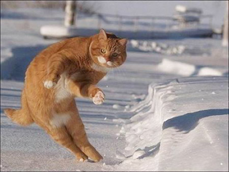 Funny Cat On The Snow 386 The Wondrous Pics