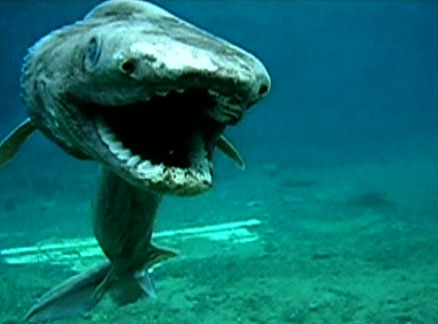 frilled-shark