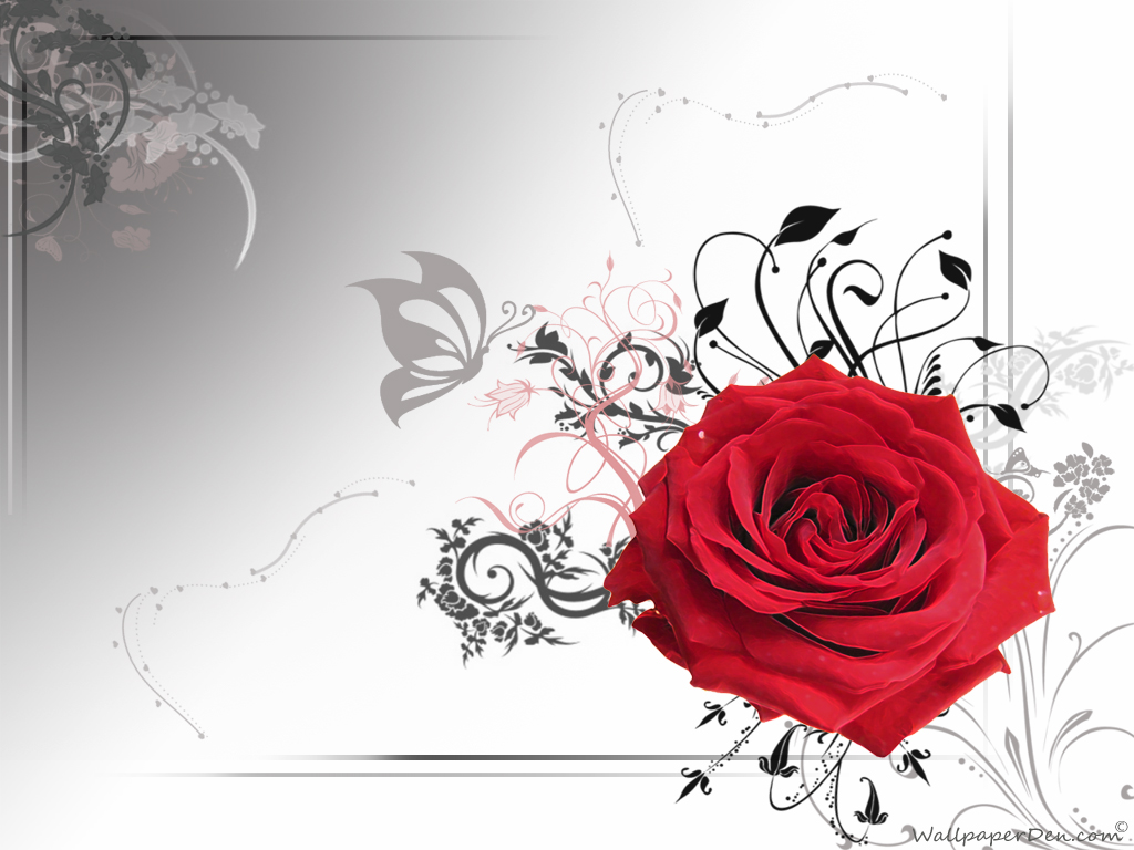 Black And White Red Rose Wallpaper