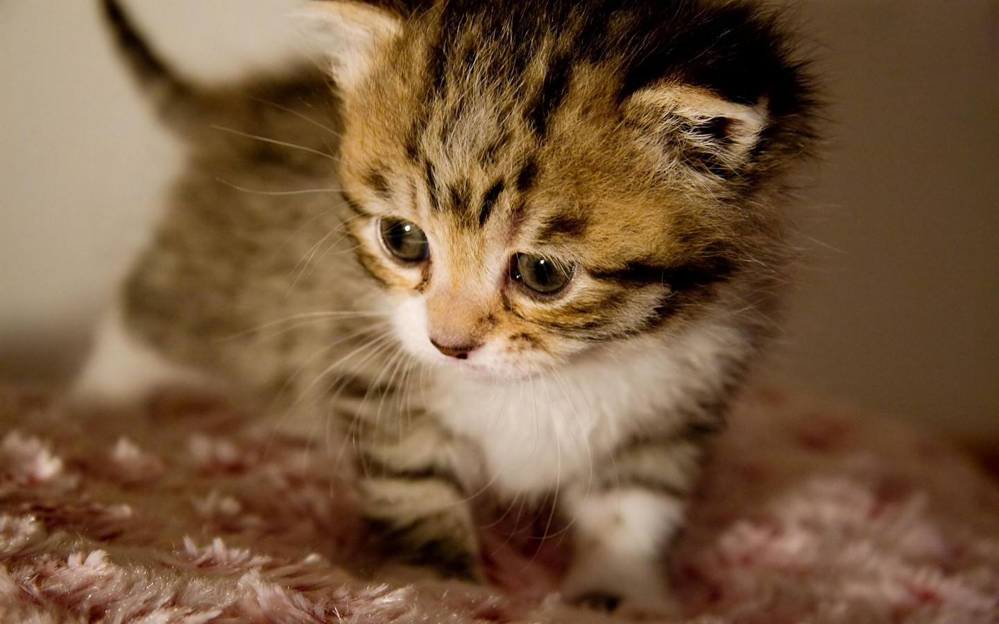cute kittin