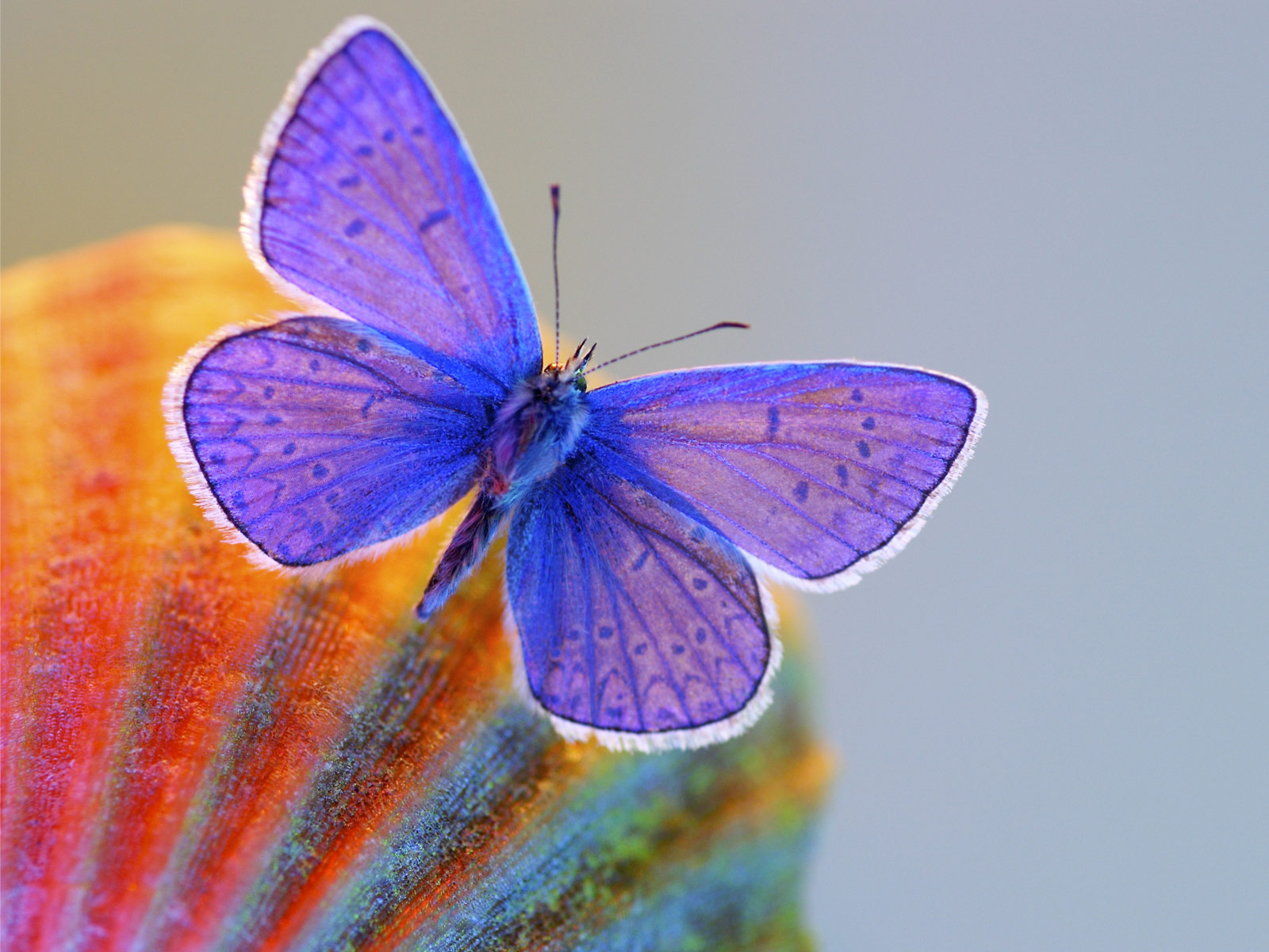 most beautiful flowers wallpapers butterflies - photo #26