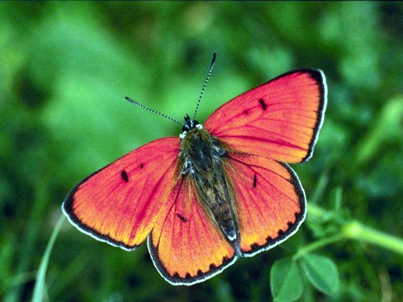 Butterfly - The Most Beautiful Insect - The Wondrous Pics