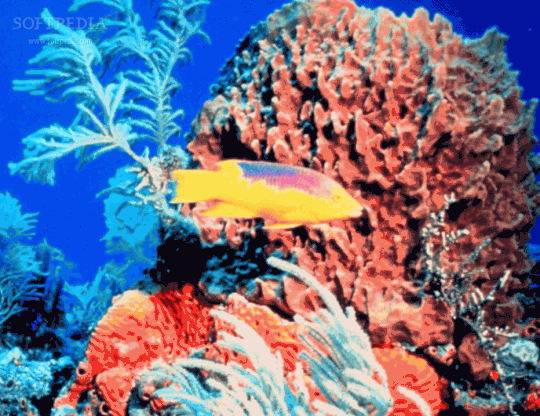 A-Tropical-Fish-and-Coral-Reef-Underwater-Journey_1