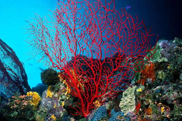 beautiful colorful coral reefs - photo #19