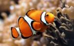 Coral_reef_fish
