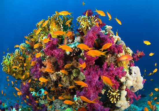 coral-reef02 - 4607 - The Wondrous Pics