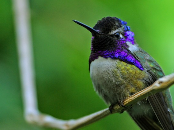 Hummingbird Facts  Where Do Hummingbirds Live  DK Find Out
