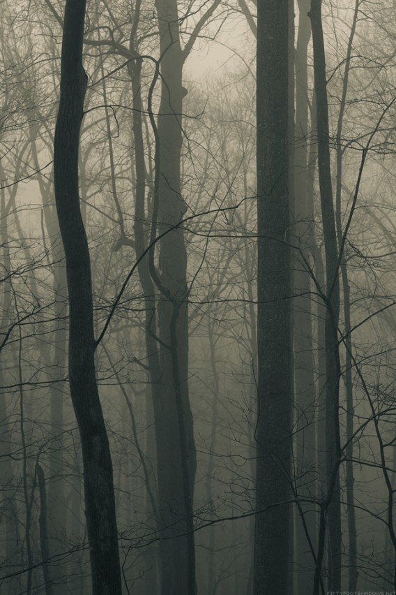 Forest Trees iPhone Retina Wallpaper