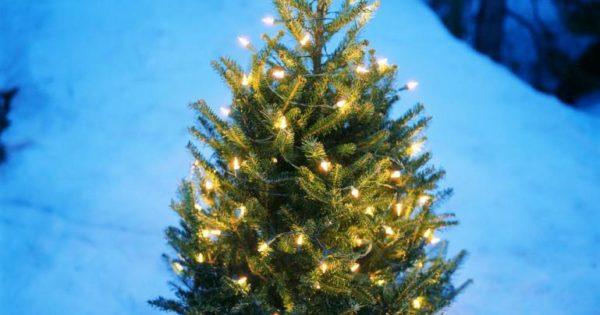 Most Beautiful Christmas Tree Decorations
