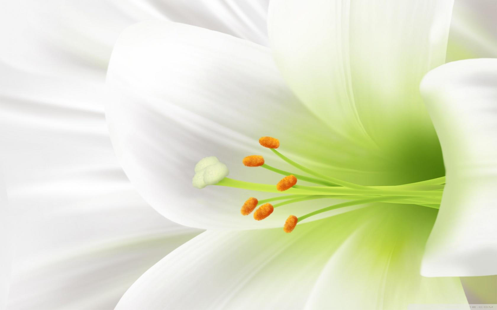Beautiful Lily Flower Wallpapers