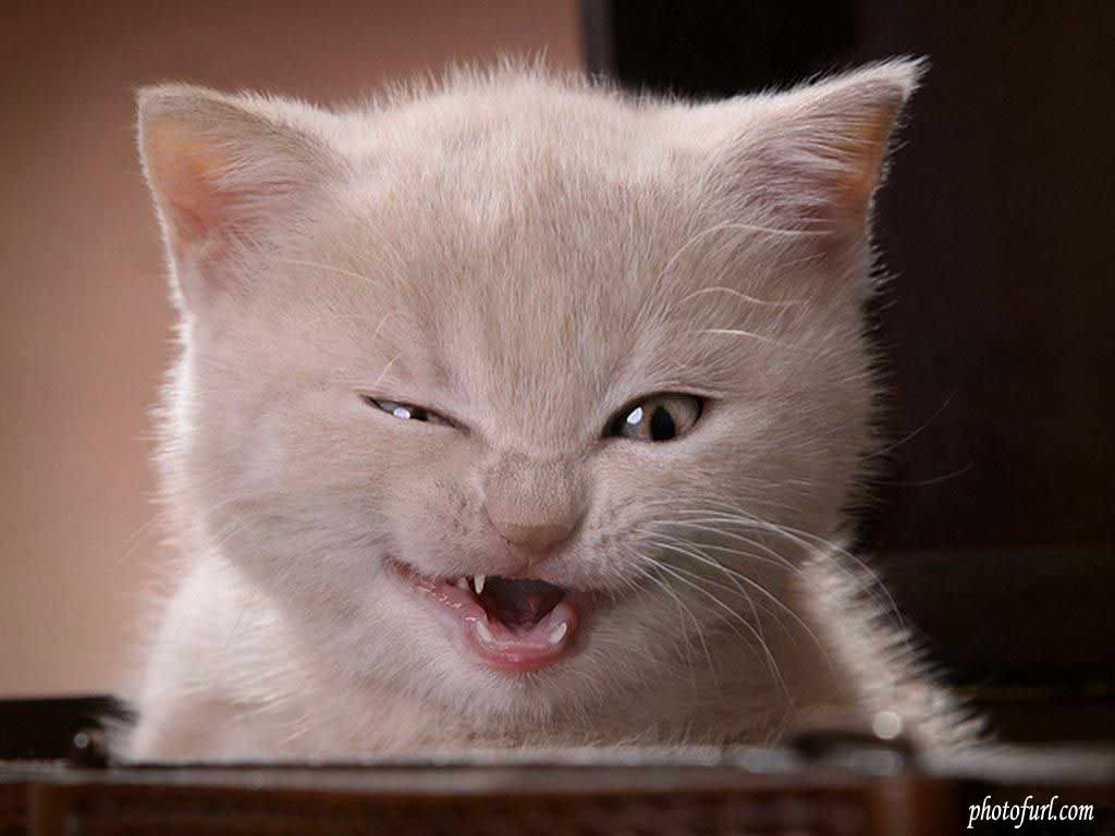 Funny-Cats (1)