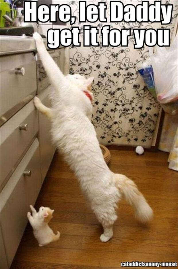 posts funny cats pictures cute puppies wallpapers iphone 5 funny ...