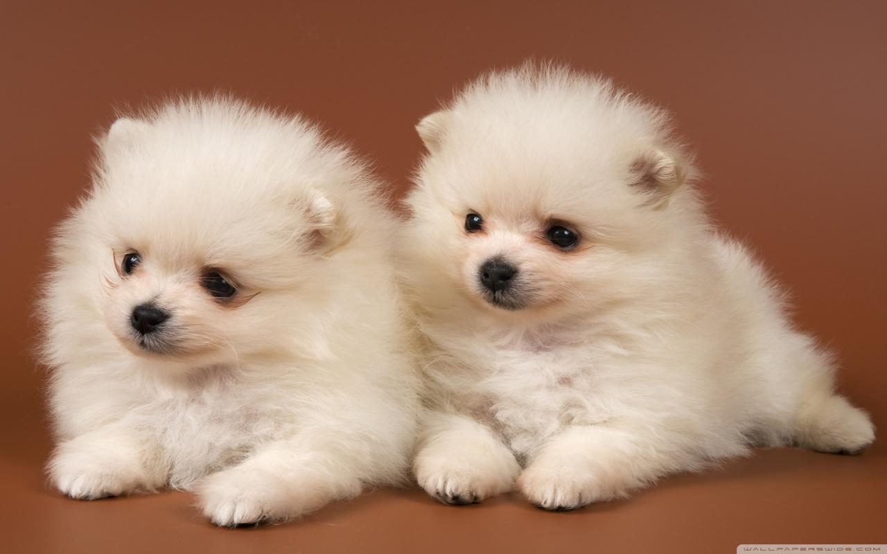 cute puppies wallpaper 14 8526 the wondrous pics