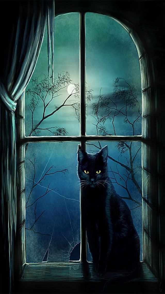 Halloween Witch Cat Iphone 5 Wallpaper 8499 The