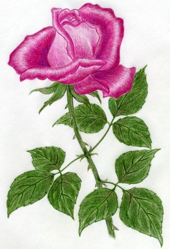 Рисунки цветы 3д