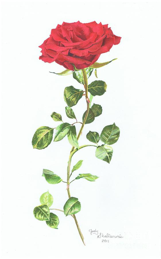 awesome rose drawings the wondrous pics