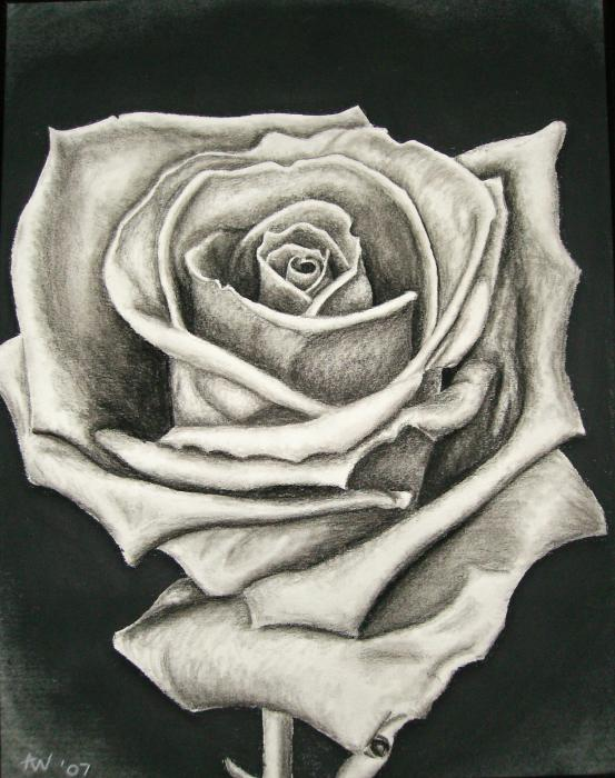 Awesome Rose Drawings - The Wondrous Pics