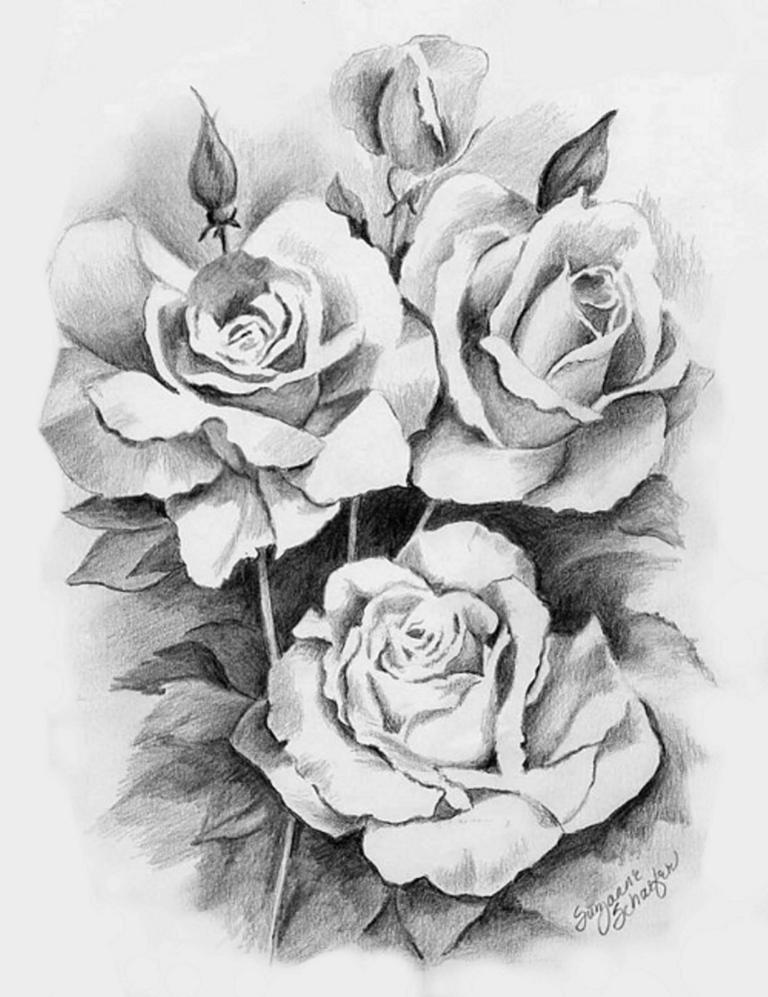 rose-drawing-14.jpg