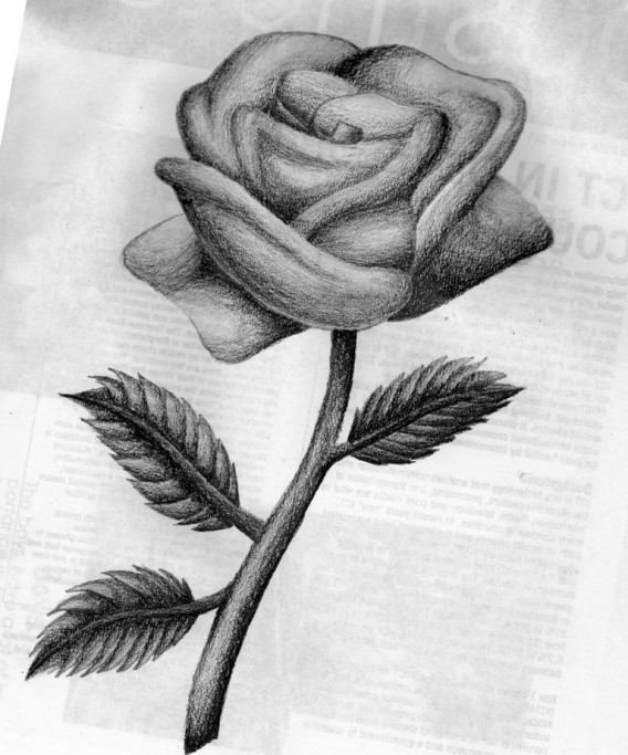 Awesome Rose Drawings