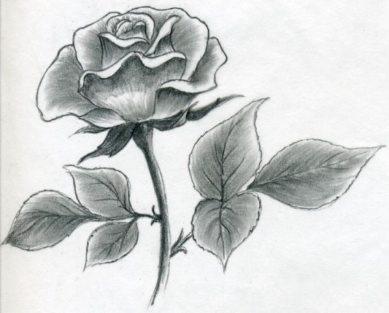 Awesome rose drawings the wondrous pics for How to draw a black and white rose