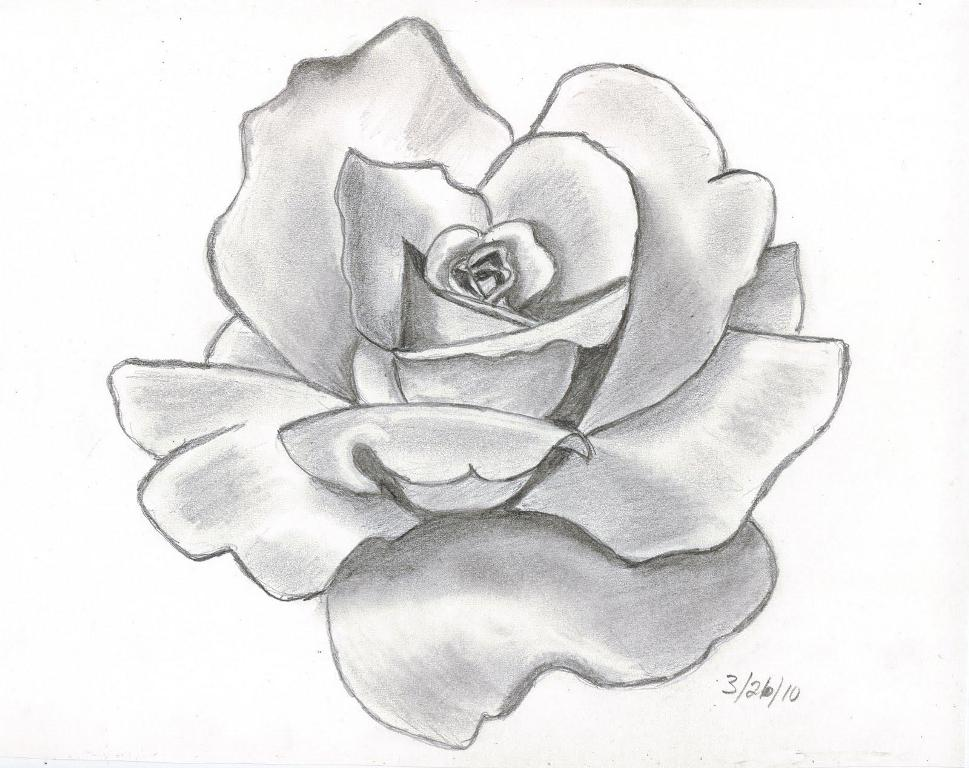 Rose drawing 6 8606 the wondrous pics for Cool things to do with roses
