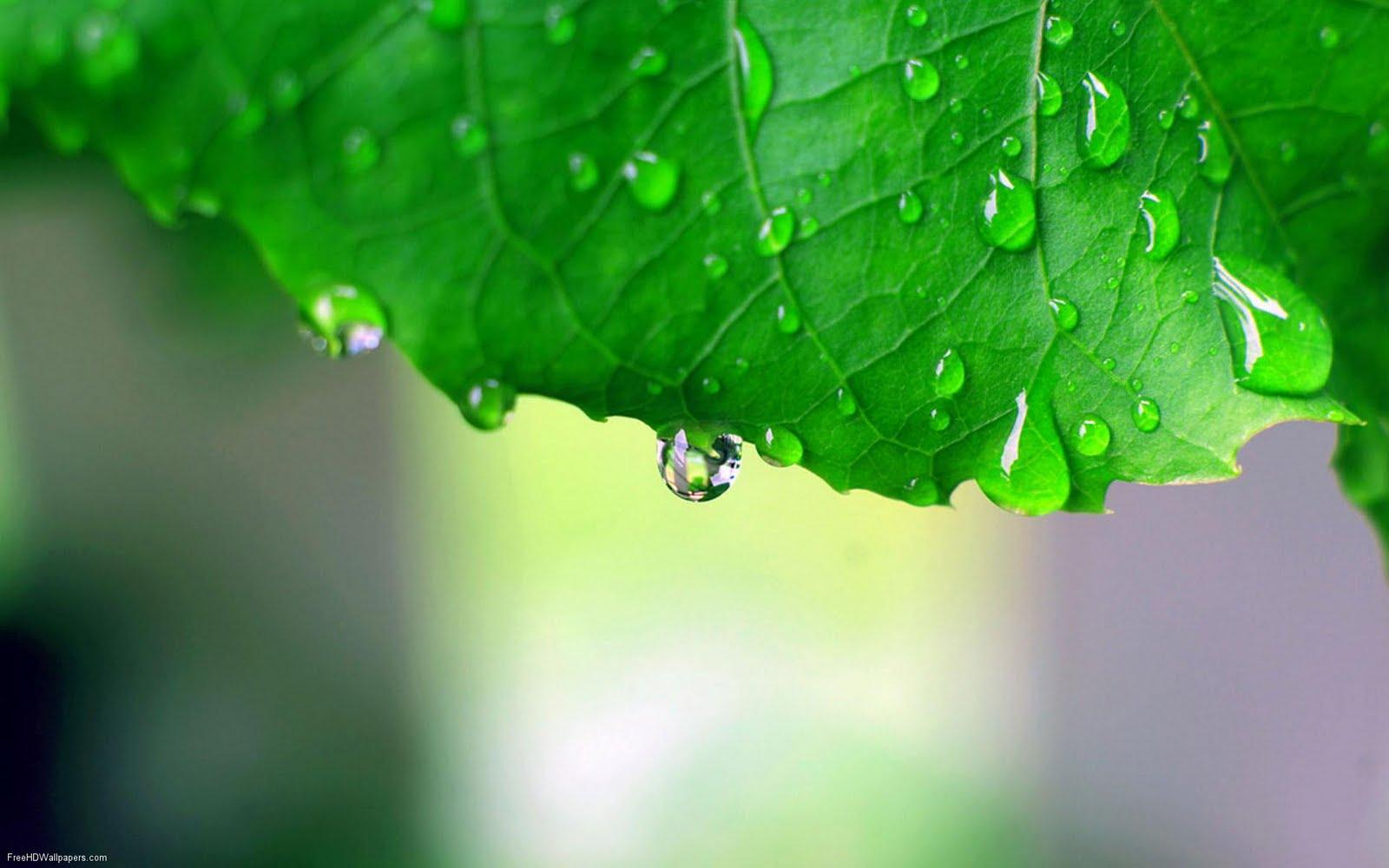 Leaf-After-the-Rain-1
