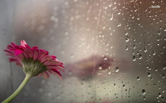 Raining Wallpapers The Wondrous Pics