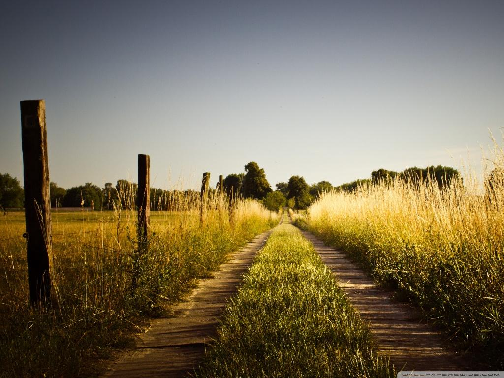 country_road_late_summer-wallpaper-1024x768