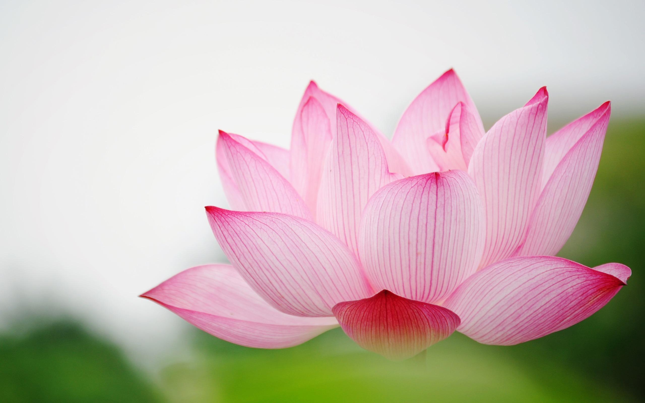 flower-wallpaper (6)