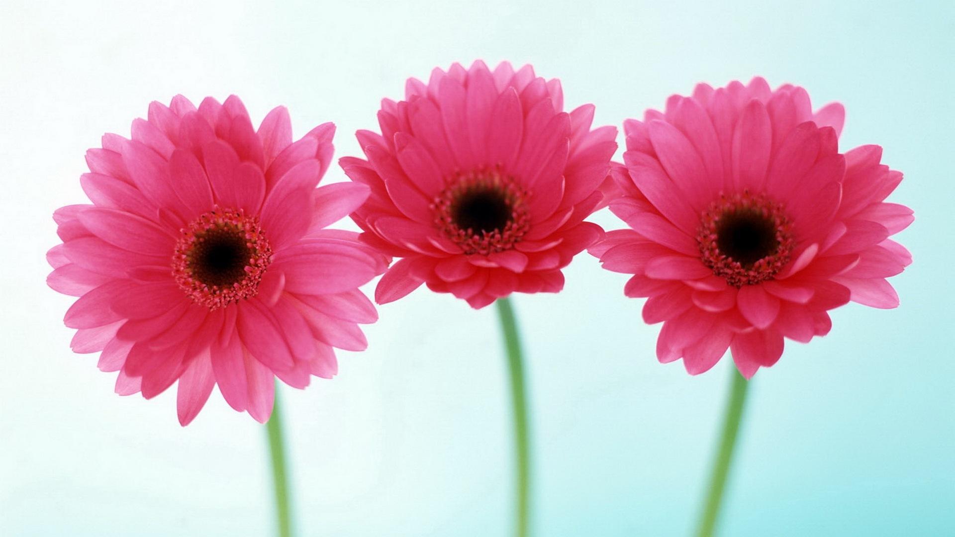 flower-wallpaper (8)