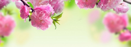 images-of-spring-flowers-and-wallpapers-3